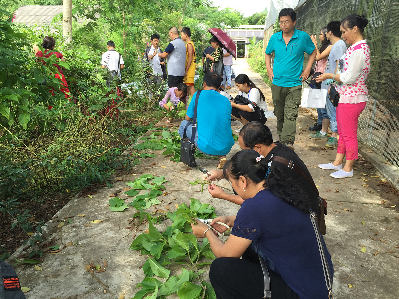 植物繁殖实践(2016年培训班)