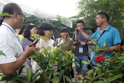 校园常见植物栽培扩繁(版纳植物园吴福川)