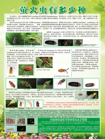 萤火虫有多少种